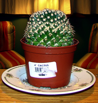 Dave the 3 Dollar Cactus