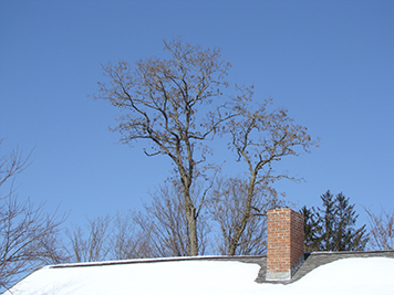 winter-tree-chimney.jpg