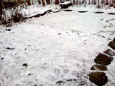 Snowy Garden in April